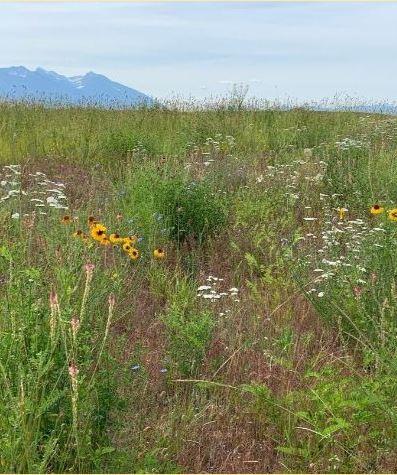 NRCS Field Walk-Crow Creek Ranch Dryland Pasture Improvement